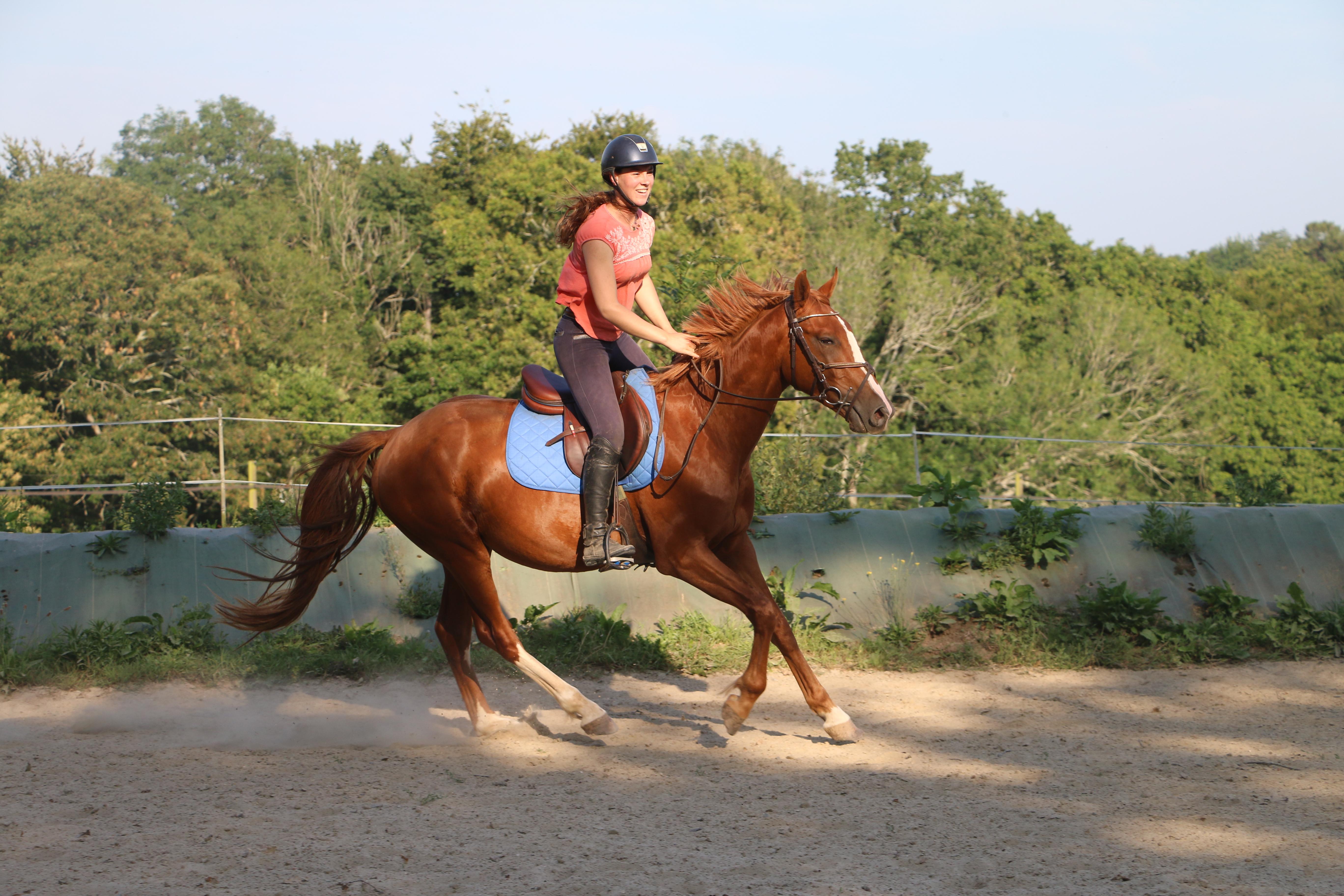 izi sovake cheval de sport à vendre